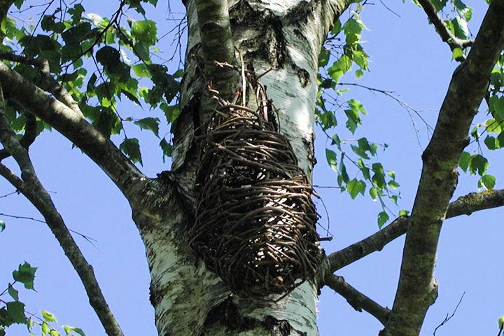Brigit's well east tree basket