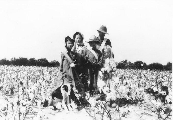 cotton01
